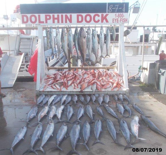 Dolphin Dock Charters : Best Deep Sea Fishing In Port